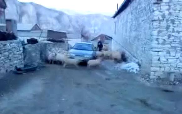 ciclone-ovelhas