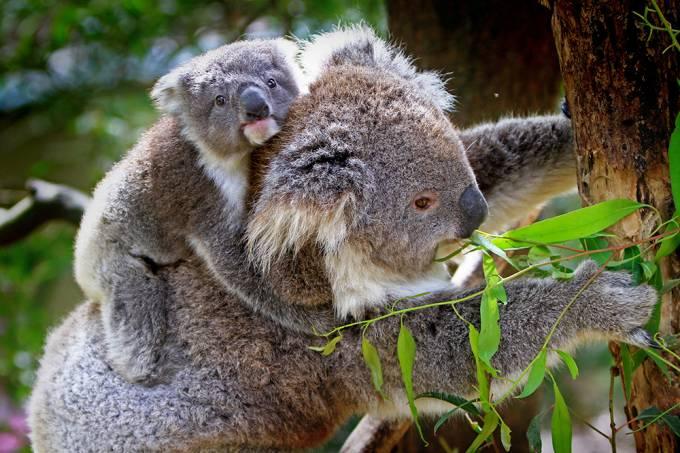 Os animais mais nojentos do mundo – Thumb