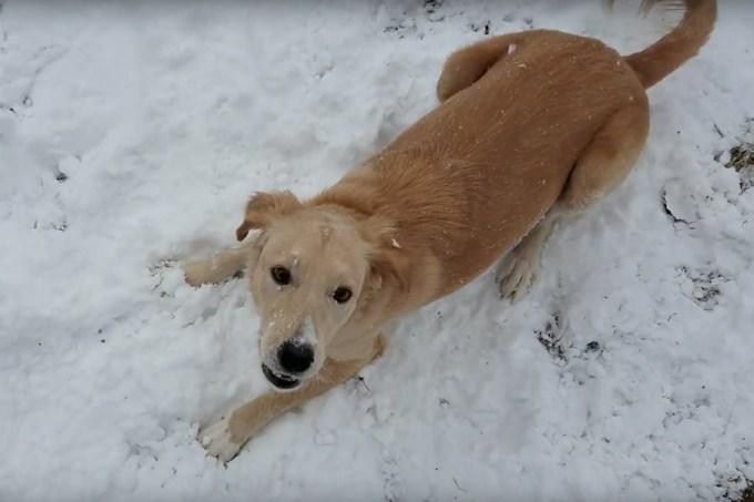 Cachorra de Porto Rico vê neve pela primeira vez e vai à loucura
