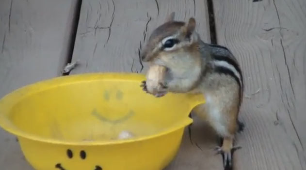 esquilo-comendo