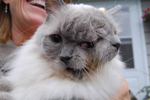 gato-duas-caras