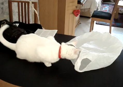 gato-sacola