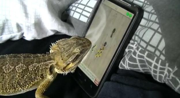 iguana-iphone