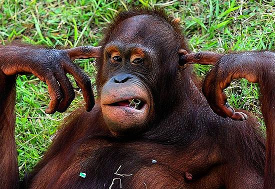 Macaco tapa os ouvidos para não ouvir visitantes de zoológico | Super