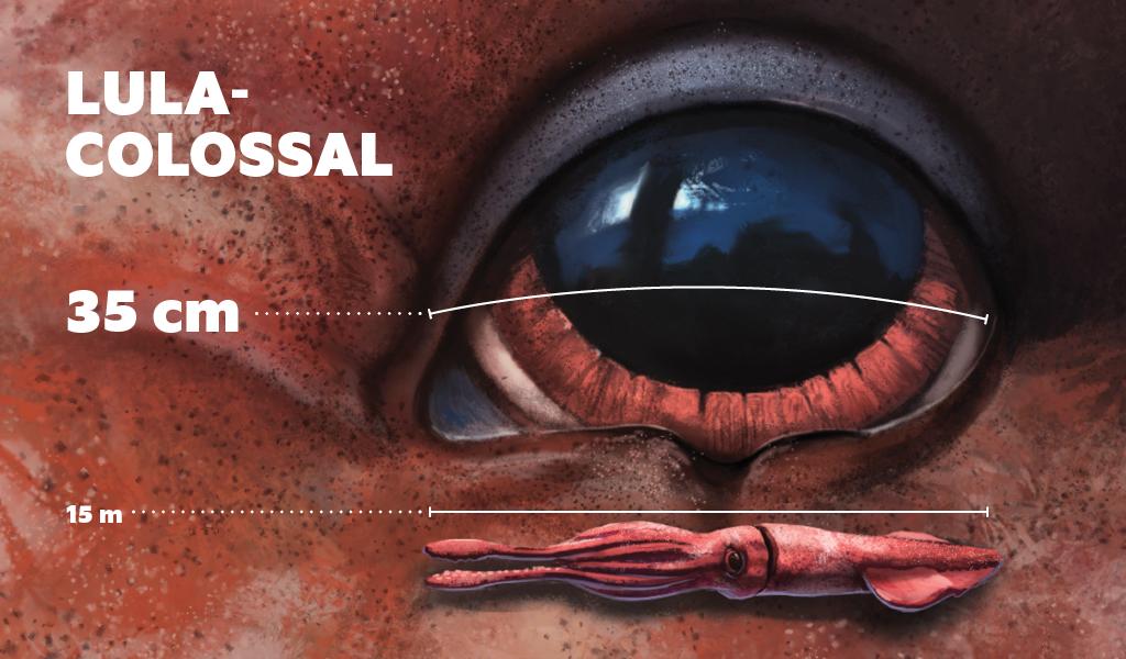 maior-olho-do-reino-animal1