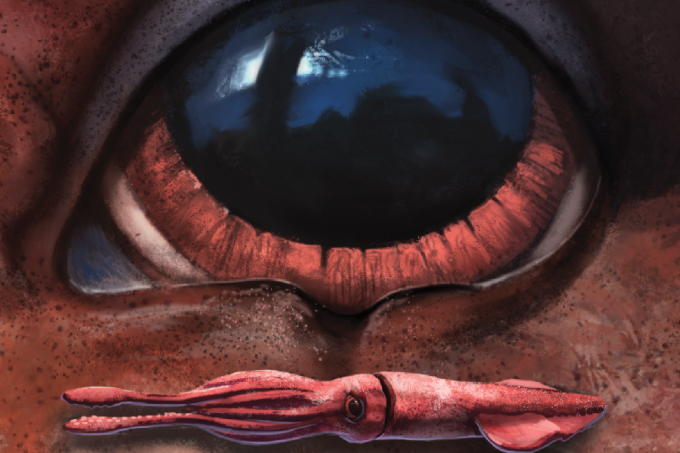 maior-olho-do-reino-animal_abre