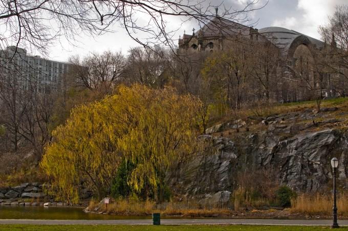 morningside_park_willow_tree