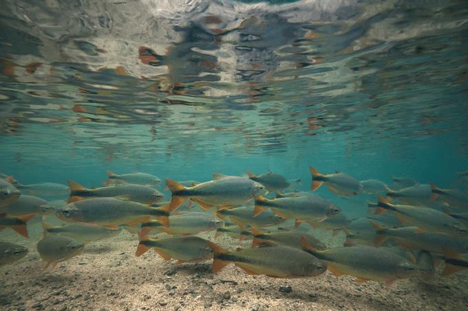 Os peixes estão perdendo o olfato — e a culpa é nossa_HOME