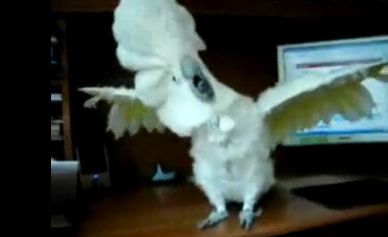 papagaio-death-metal