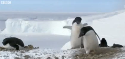 pinguim-ladrao