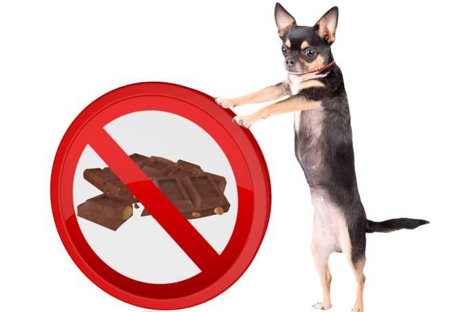 Por que cachorros não podem comer chocolate