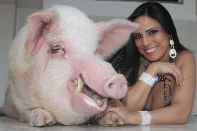 porco1