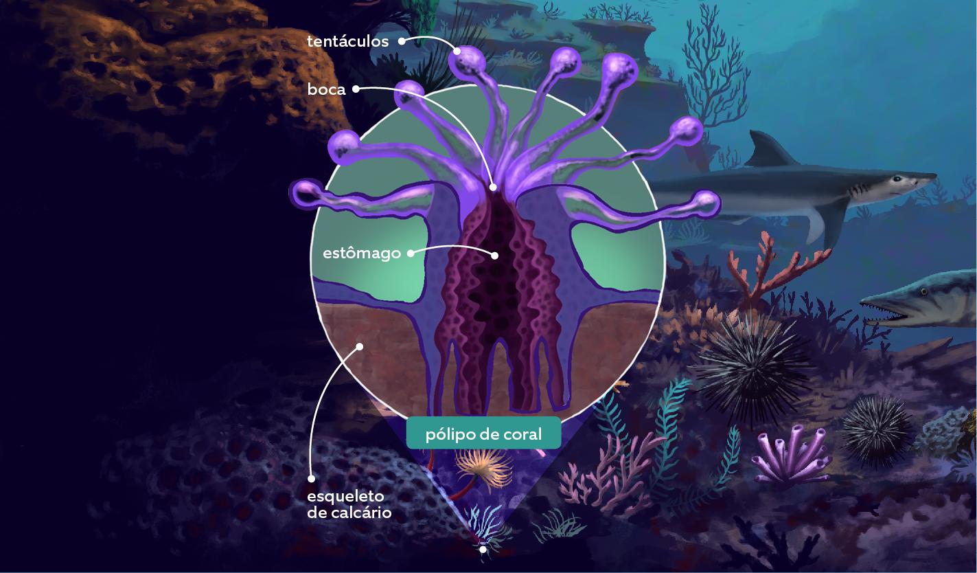 recife-de-coral-2