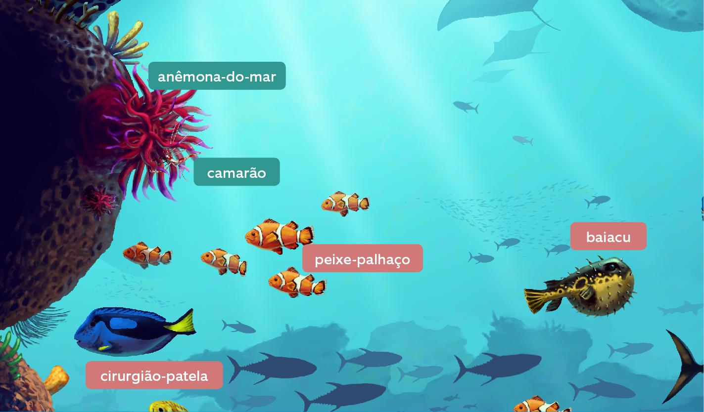 recife-de-coral-6