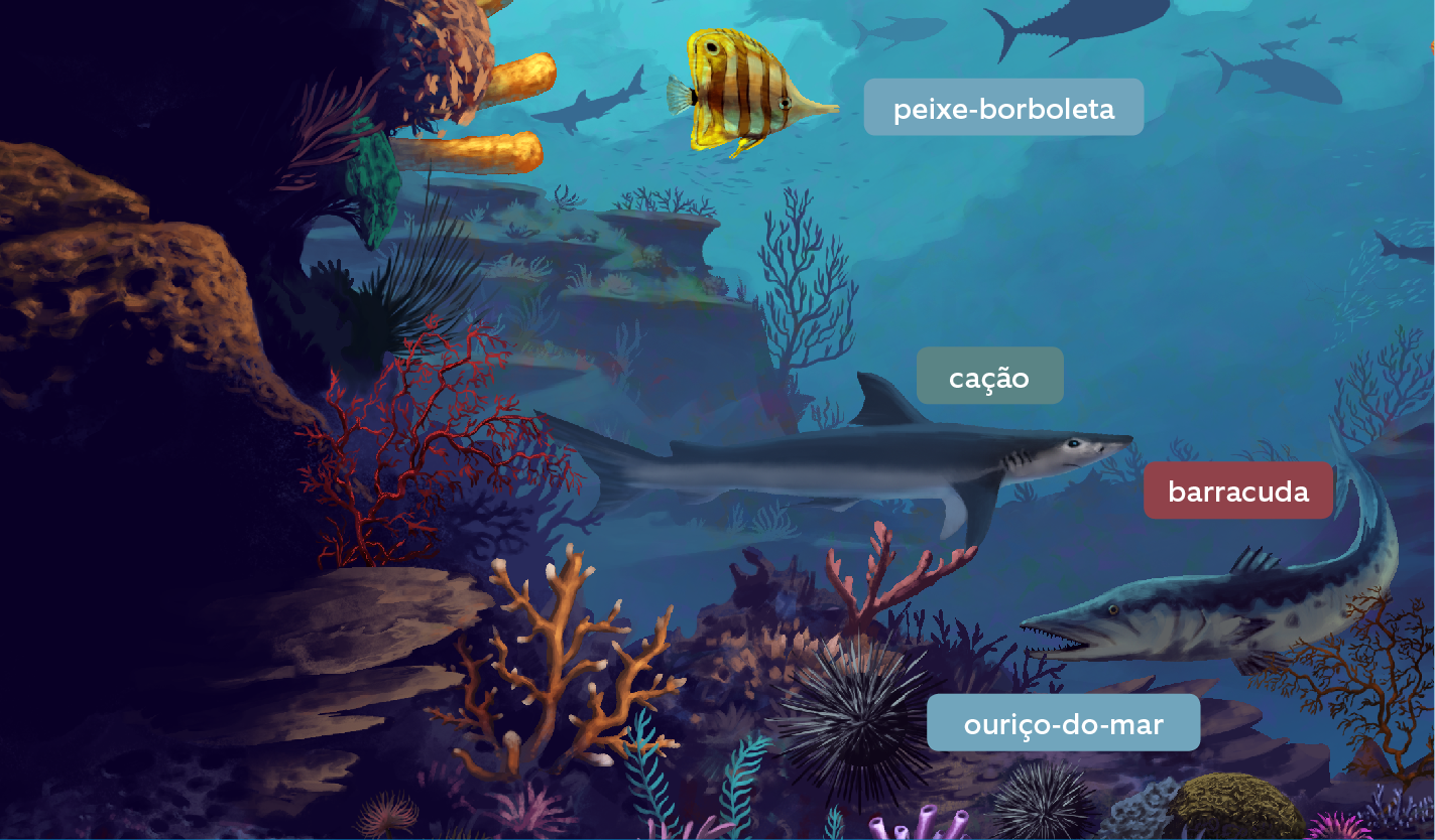 recife-de-coral-7