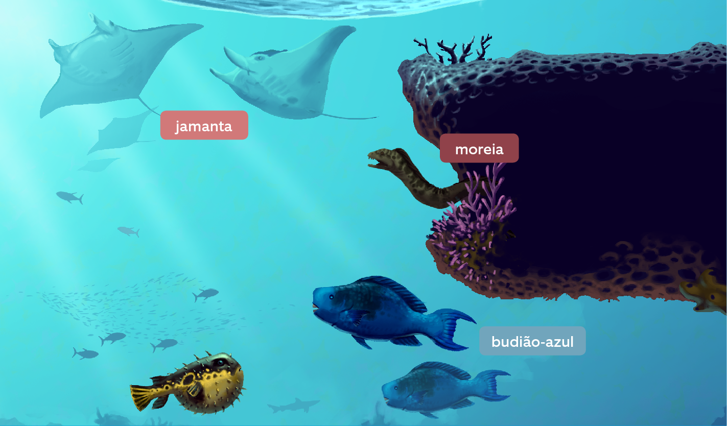 recife-de-coral-8