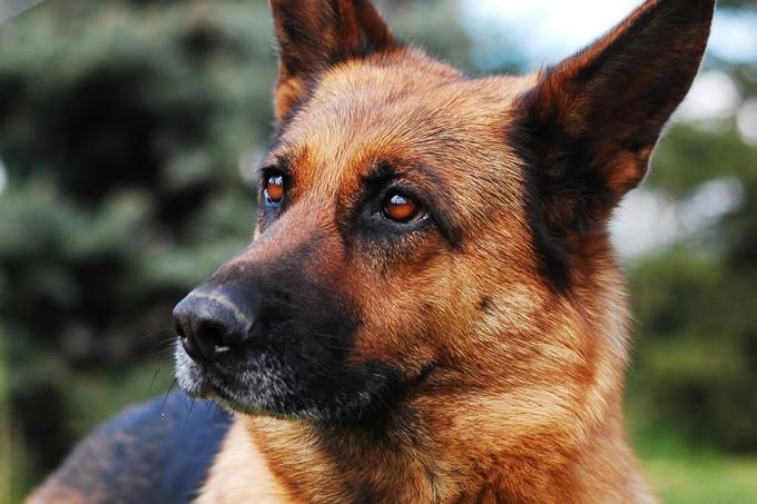 Cachorro vive momentos de emoção ao ver que o dono sumiu
