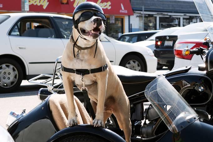 Cachorro precisa dar uma paradinha durante viagem de moto