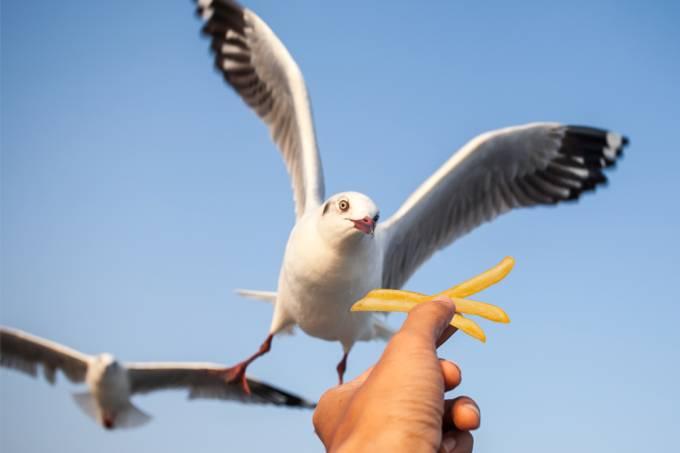 Homem brinca com o perigo e ilude gaivotas com batatas fritas