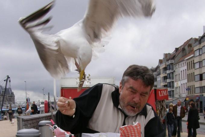 Restaurante equipa clientes com armas de água para espantar gaivotas abusadas 1