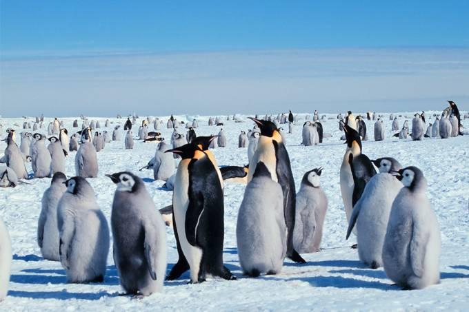 Faz mais frio no Pólo Norte ou no Pólo Sul?