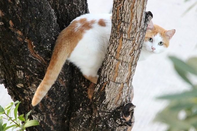Após ficar três dias preso em uma árvore, gato é resgatado e sobe imediatamente em outra árvore – Thumb