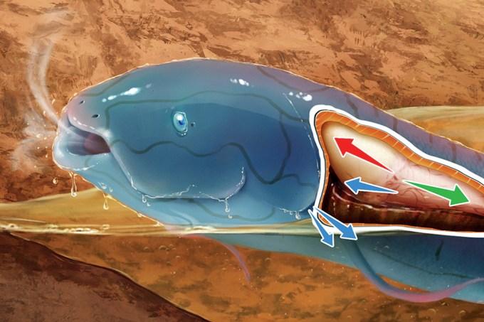 É verdade que um peixe da Amazônia consegue respirar no seco? – Thumb