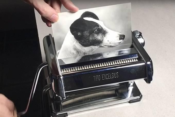 Fragmentadora de papel cria o milagre da multiplicação de cachorros