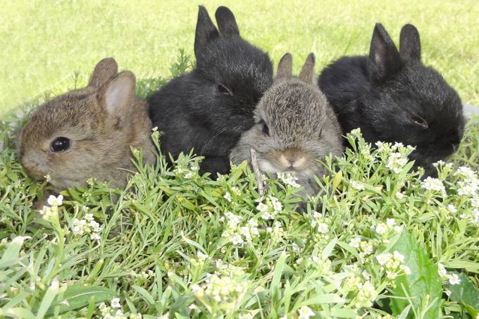 Ilha no Japão é um paraíso para quem gosta de coelhos