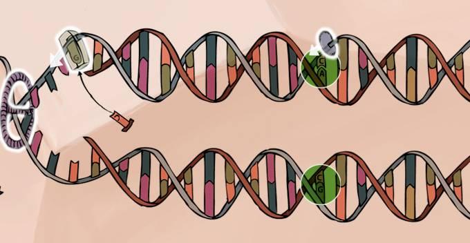 A chave da mudança: o DNA