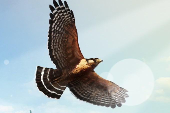 treinamento falcoaria abre