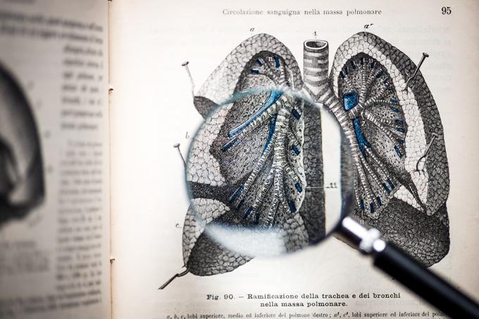 Cientistas implantam primeiro pulmão artificial em porco_HOME