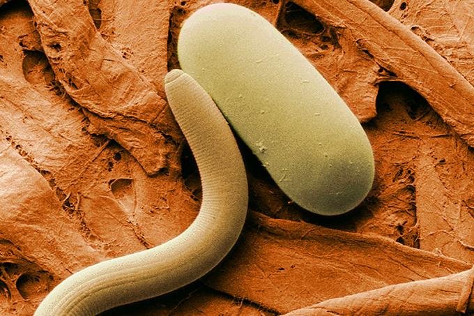 Cientistas Russos ressucitam bactéria de 40 mil anos atrás_HOME