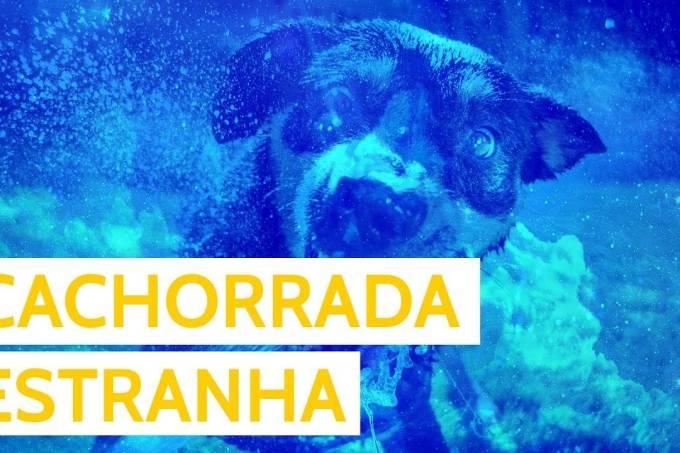 Os melhores GIFs de cachorros sendo estranhos – GIFS
