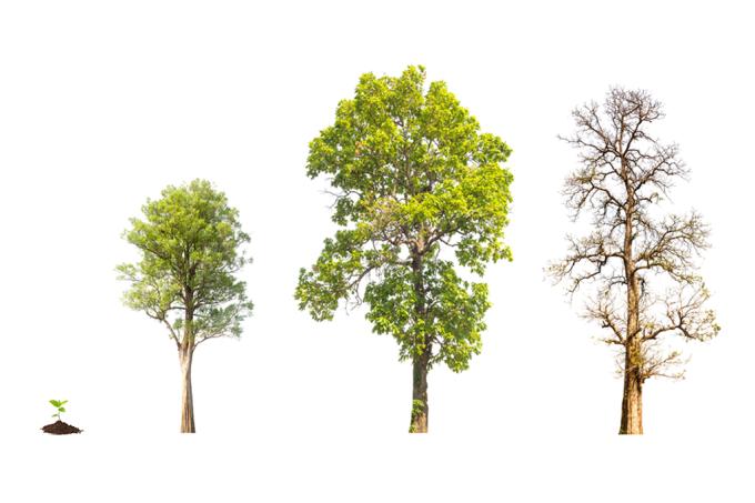 Ciclo de vida da árvore