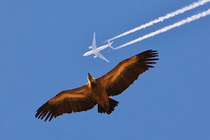 Pássaro e avião