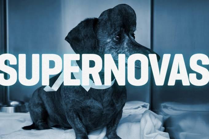 Cachorrinha com câncer ganha crânio novo impresso em 3D – SUPERNOVAS