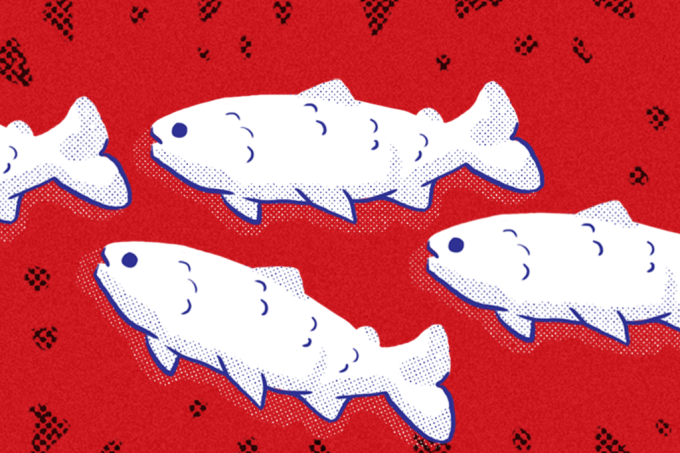 Puzzle peixes