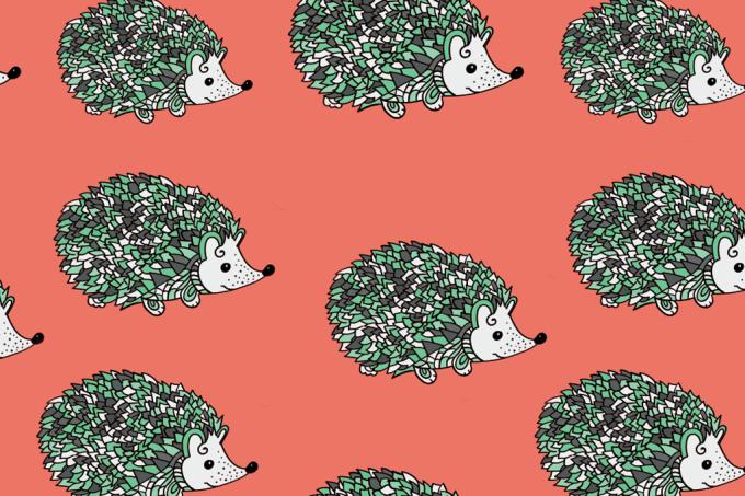 porco-espinho