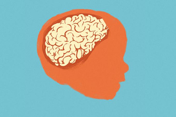 Cérebro Bebe