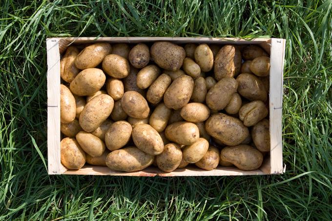 caixa-batatas-granada
