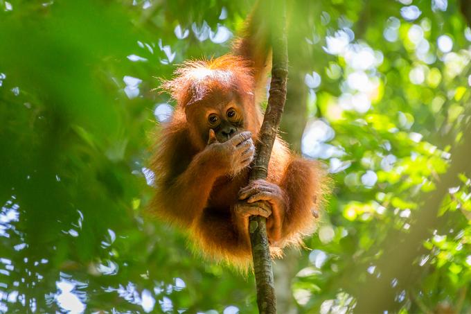 macacos-esquilos-alimento