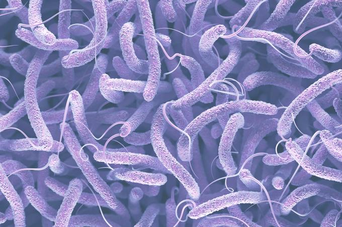 Site_BacteriaMarinha