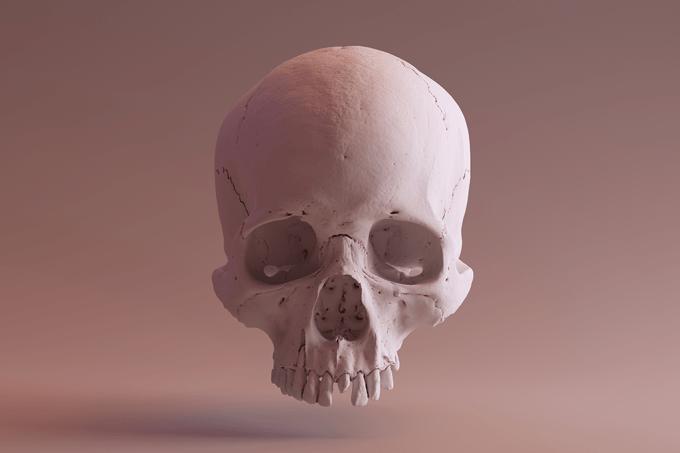 cranio-evolucao