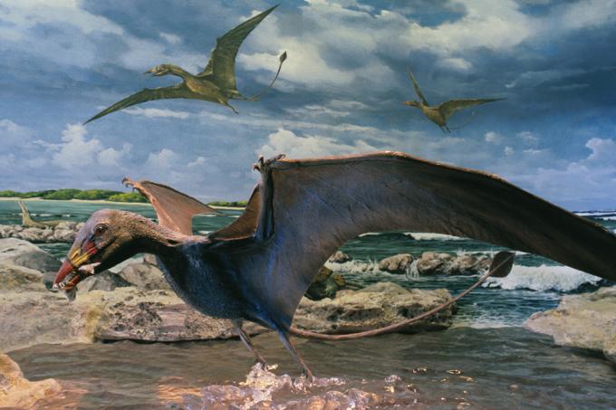 SI_DinosVoadores