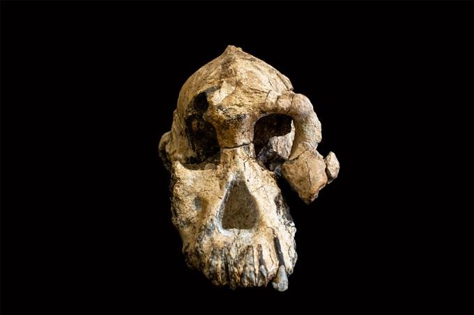 cranio_pré-australoptecínio