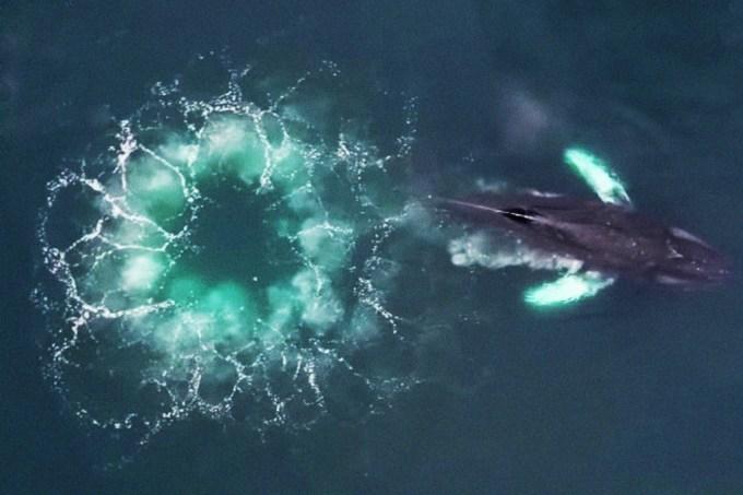 baleia-redes-bolhas