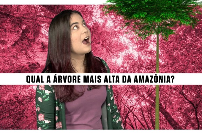 Qual a árvore mais alta da Amazônia?