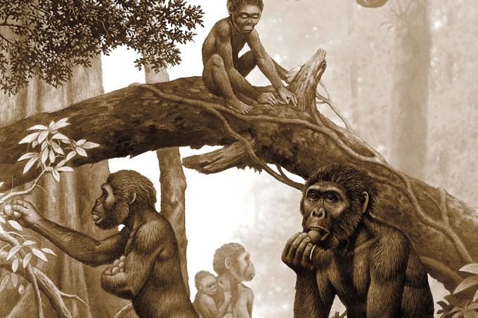 SI_Evolução humana