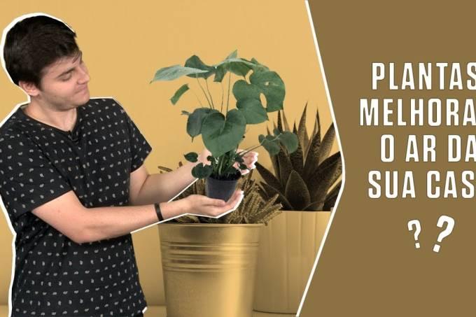 Plantas melhoram o ar da sua casa?